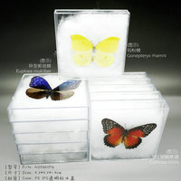 FOUSEN Random Species Prepared dried butterfly in transparent insect boxes Butterfly Specimen