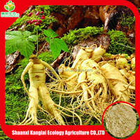 Herbal medicine plant extract Ginseng extract with 80% UV Ginsenosides