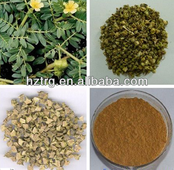 Low price white saponin/ tribulus terrestrial saponin extract