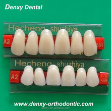 Dental products Three-layers Synthetic Resin porcelain Teeth/Tooth