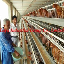 manufacture bird cage for sale