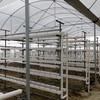 Agricultural Hydroponics U Type Trough Growing
