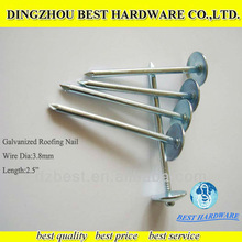 twist umbrella stainless steel coil roofings nail
