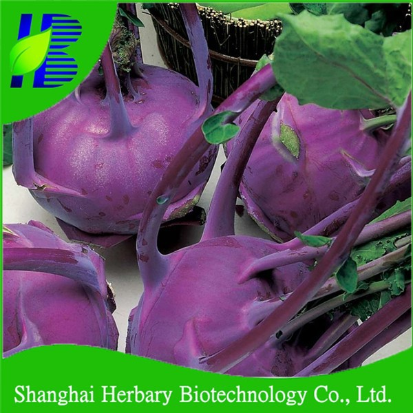 2017 Fresh Purple kohlrabi Seeds with insect resistance