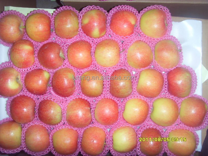 2014 Royal Red gala apple early mature hot selling