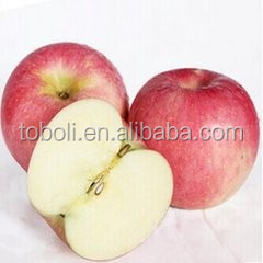 good quality sweet fresh apple from China Qinguan apple wholesale prices apple fruit