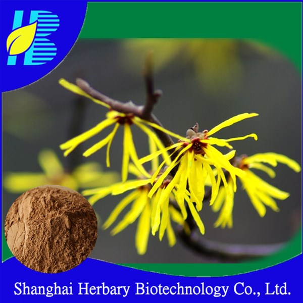 Natural cosmetic ingredient 4:1,10:1,20:1 Witch hazel extract