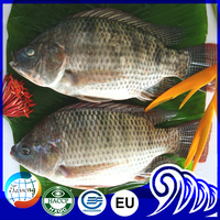 Wholesale African Food 500-800 Fresh Water Fish Tilapia Farm Price