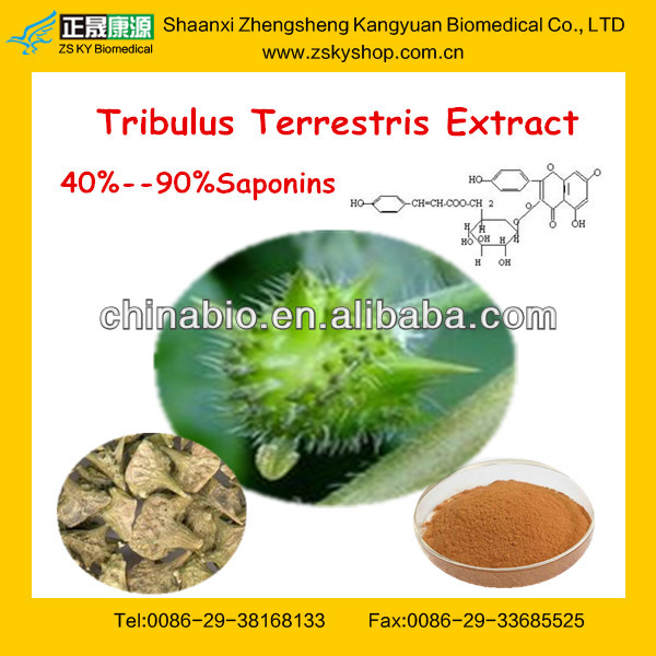 100% Natural Pure Tribulus Terrestris Extract /Saponins 40%-90%