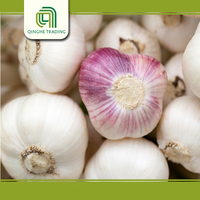 Brand new natural fresh garlic with great price