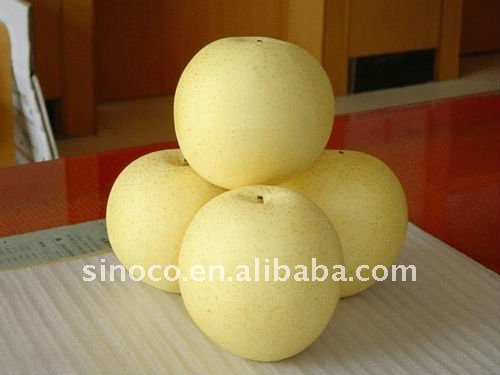 Apple Pears From China (Crown Pear)