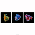 Swimming Goldfish Art Photography Canvas Prints Home Interior Decoration Living Room Office Wall Decor Wholesale