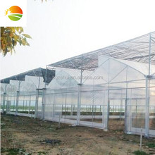 [golden greenhouse supplier] multi span agricultural film sawtooth greenhouse