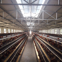 Hot Selling Best Price Battery Cage