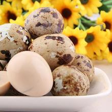 Canned Food 425G Canned quail eggs