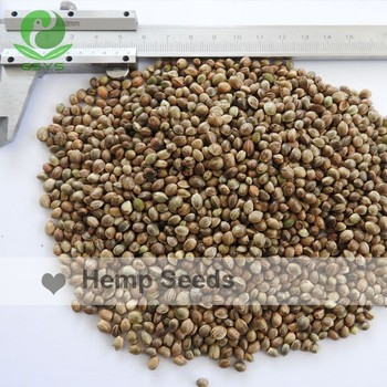 hemp cultivation in china Hemp can be grown for fiber, seeds, and/or for dual purpose in a wide range of   industries and an increase in hemp cultivation area in china since 2007.