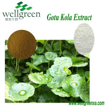 Gotu Kola Extract / GMP Centella Asiatica extract Madecassic acid best quality in China