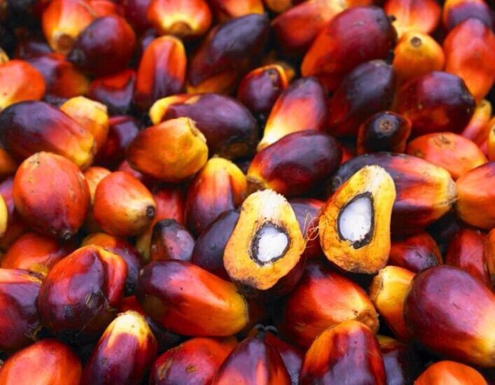 Turkey key for palm oil production line With ISO,CE certificate