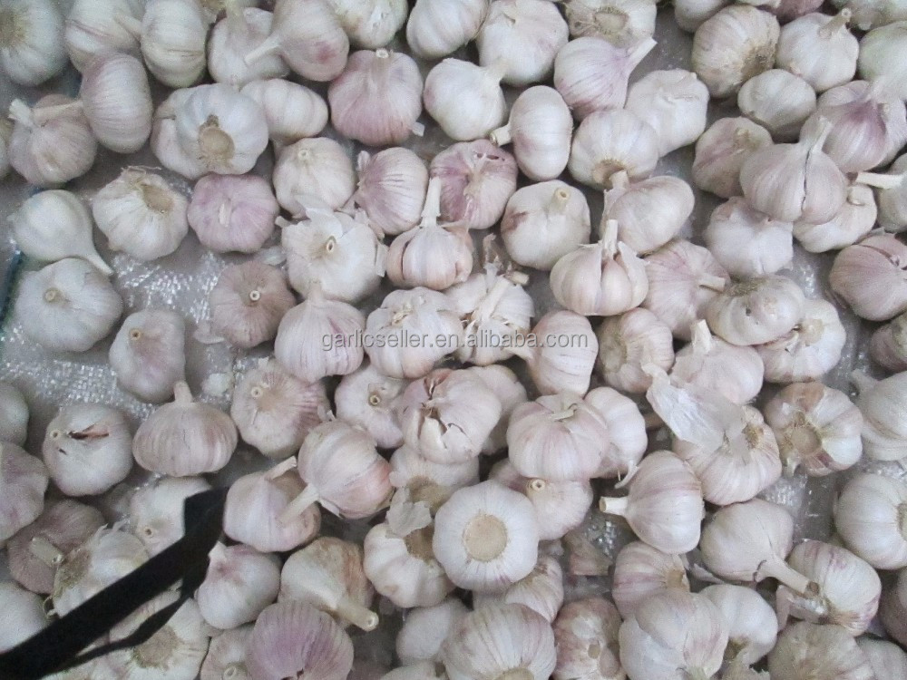 fresh chinese garlic