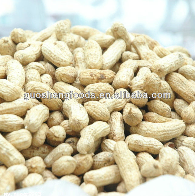 Chinese new crop raw peanuts in shell