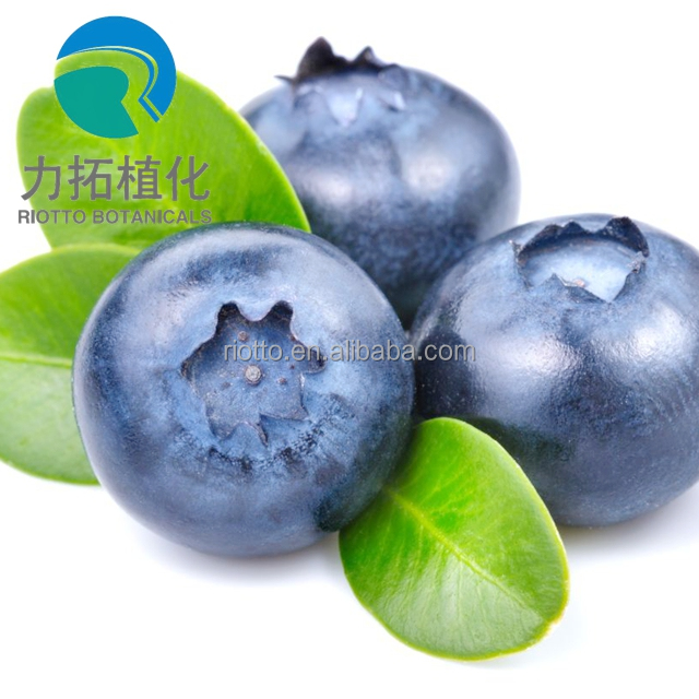 GMP standard factory supply pure proanthocyanidins 5%-30% from blueberry powder extract