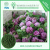 BEST price 60% Total Isoflavones Red Clover extract HIGH quality