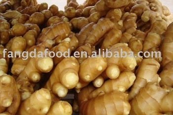 new seasonal fat ginger from china