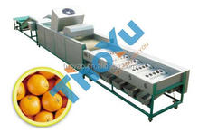 Made in china fruit citrus and vegetable sorting machine