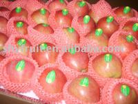 2012 chinese red star apple