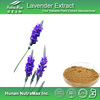 Lavender Extract,Lavender Powder,Lavender Oil Price