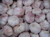 2015 new crop chinese fresh pink garlic for hot selling