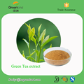 Natural Tea Polyphenol Green Tea Extract