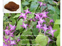 High quality herbal epimedium extract powder