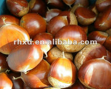 2017 health foods chinese chestnuts for sale/canned chestnuts roasted/fresh chestnut