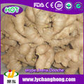 quality organic ginger root for europe market