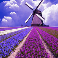 YiWu Lavender landscape wall painting artwork diamond painting