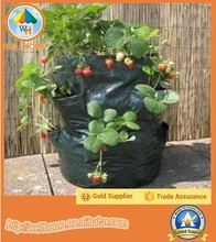 Strawberry Planter Plant Grow bags Strawberry Garden Field Grow Bag
