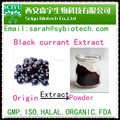 Black Currant Extract Anthocyanins 5%, 10%, 15%, 20%, 25%