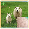 Top quality sheep placenta extract