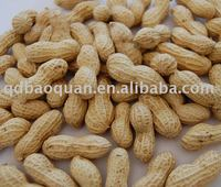 Roasted Groundnut In Shell (Round Size)