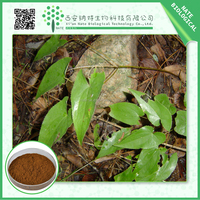 Gold Supplier China herbal extract/horney goat weed extract