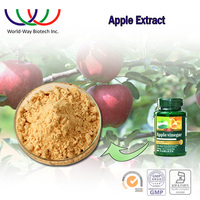 dried apple extract powder organic with phloridzin 98%