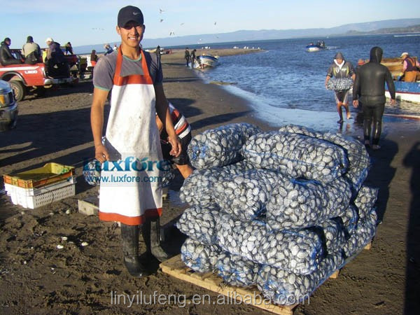 Shellfish Seafood Packing Net Bag for Whelks, Snails, Conch