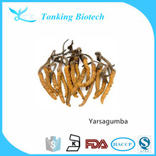 Tonking Natural Yarsagumba From Tibet for improving immuning system with best price