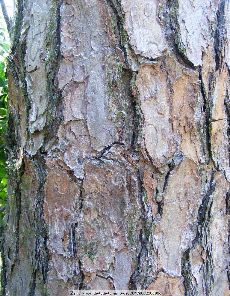 Hot Pine Bark Extract