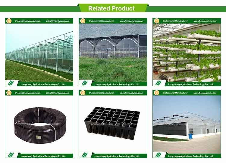 Factory price vegetables growing greenhouse hydroponic systems