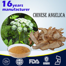 Chinese Angelica Extract 5:1/Angelica sinensis (Oliv.) Diels. Extract
