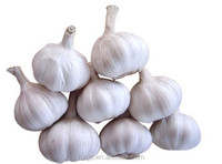 Fresh Nice Garlic 2016