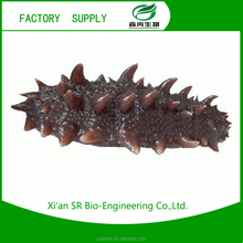 SR Free Sample Seacucumber Dry Extract/sea Cucumber Powder/trepang Extract Plant Extract
