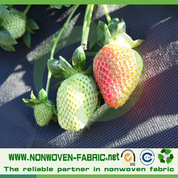 Anti-UV treatment pp spunbond nonwoven fabric agriculture cover/pp spunbond tunnel